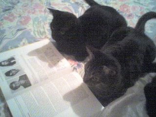 Cats_reading